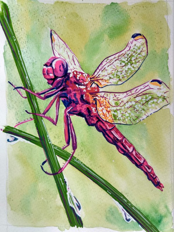 Colleen Biden's Janet Fish-esque Dragonfly
