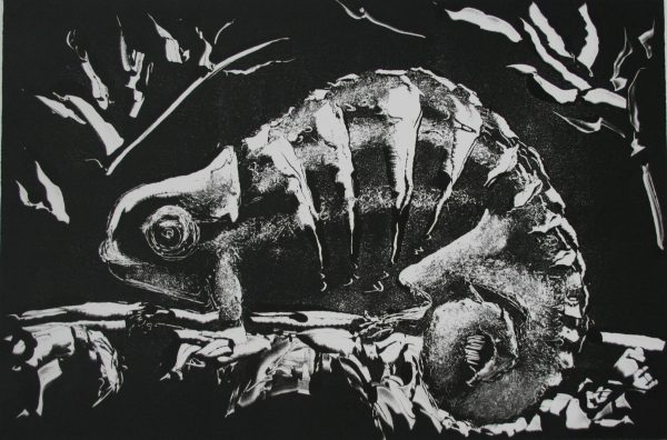 Black and White images of a chameleon on a branch