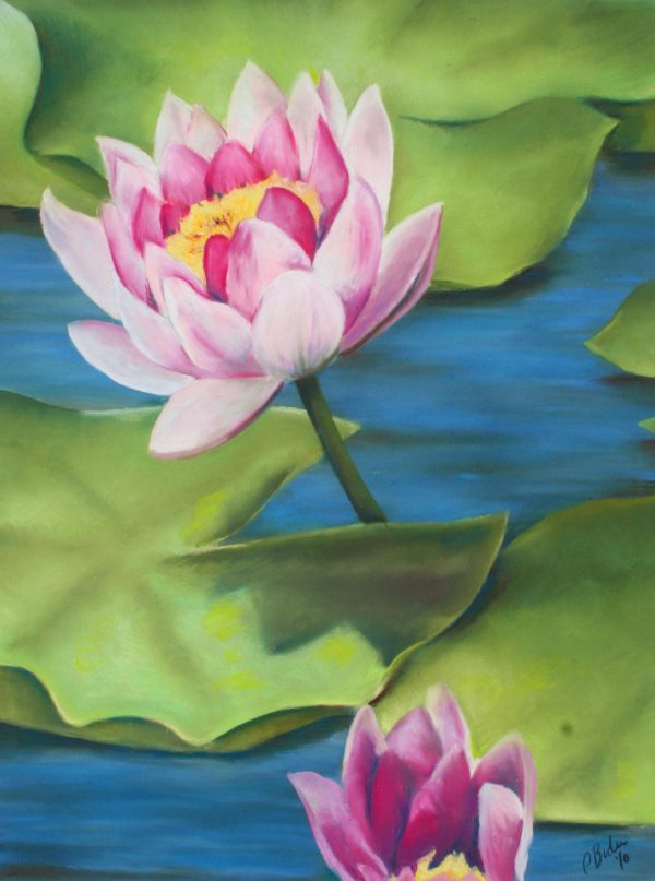 Two pink lotus blooms over lily pads on water