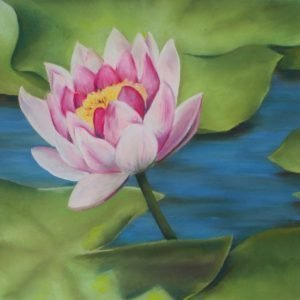 Pink lotus bloom over lily pads
