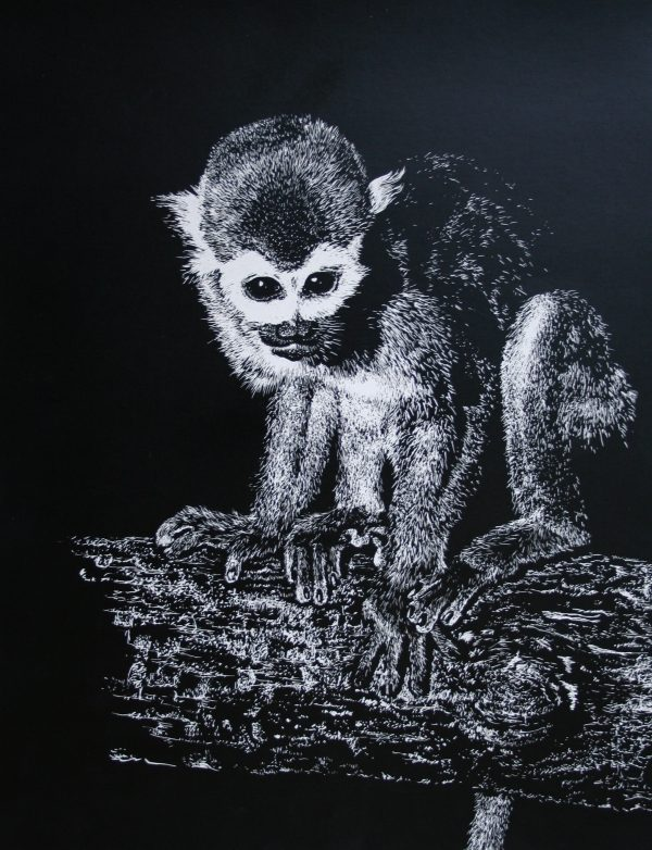Realistic squirrel monkey drawn on scratchboard in black and white.