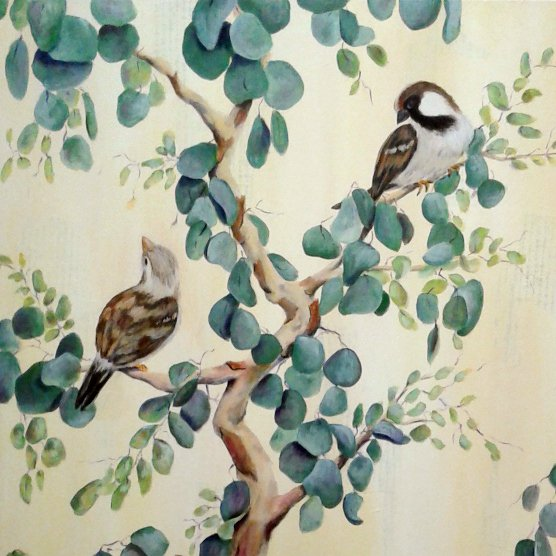 Detail view with 2 sparrows in a eucalyptus tree