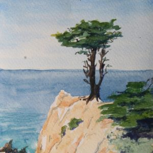Lone monterey pine on a bluff above the ocean